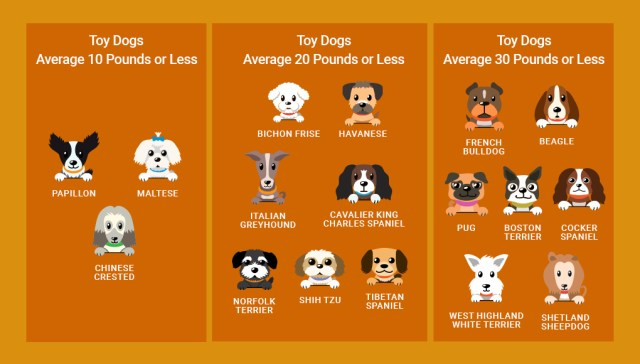 Small Dog Breeds for KIDS
