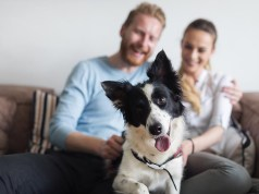 27 Crazy Pet Ownership Statistics You Didn't Know About