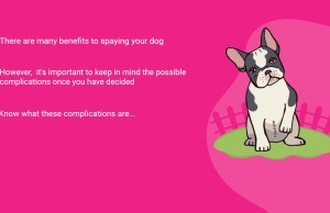 5 Possible Complications After Spaying Your Dog