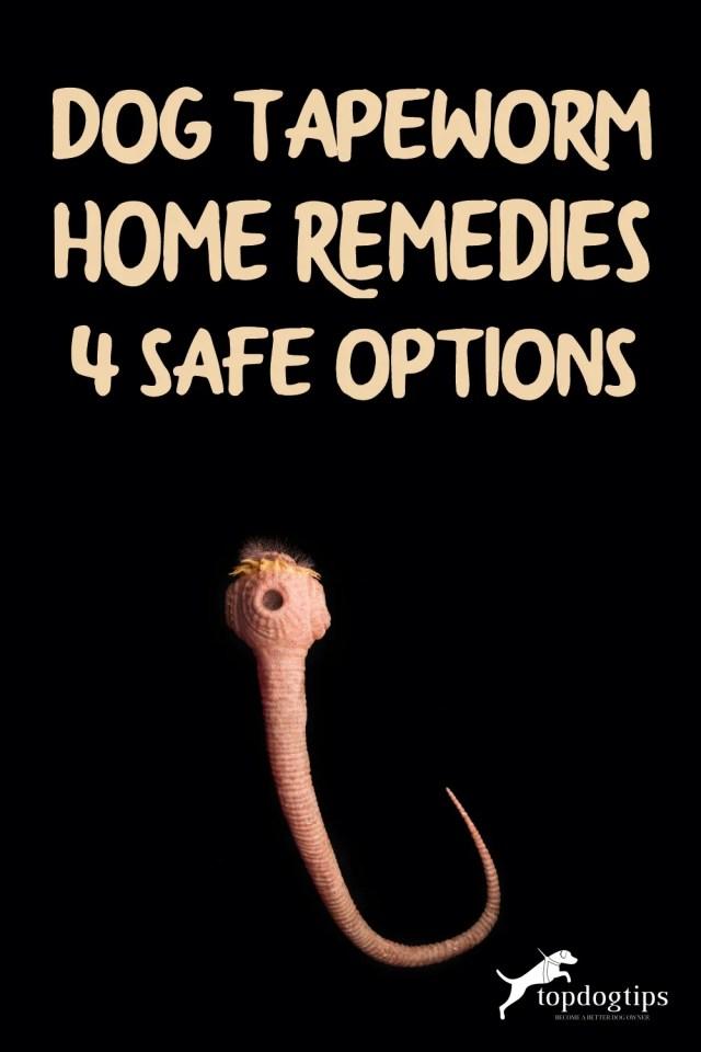 Dog Tapeworm Home Remedies- 4 Safe Options