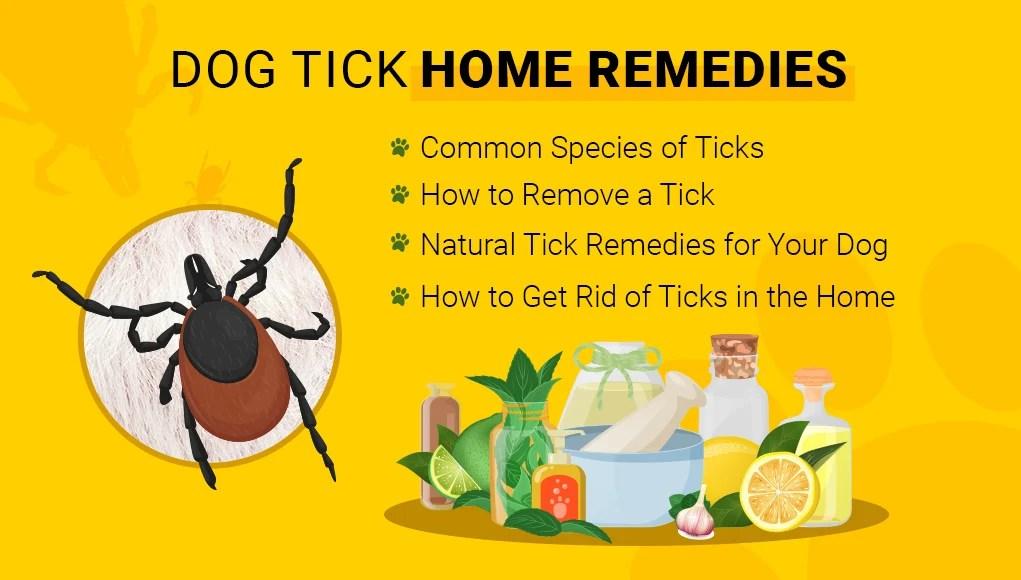 Dog Tick Home Remedies