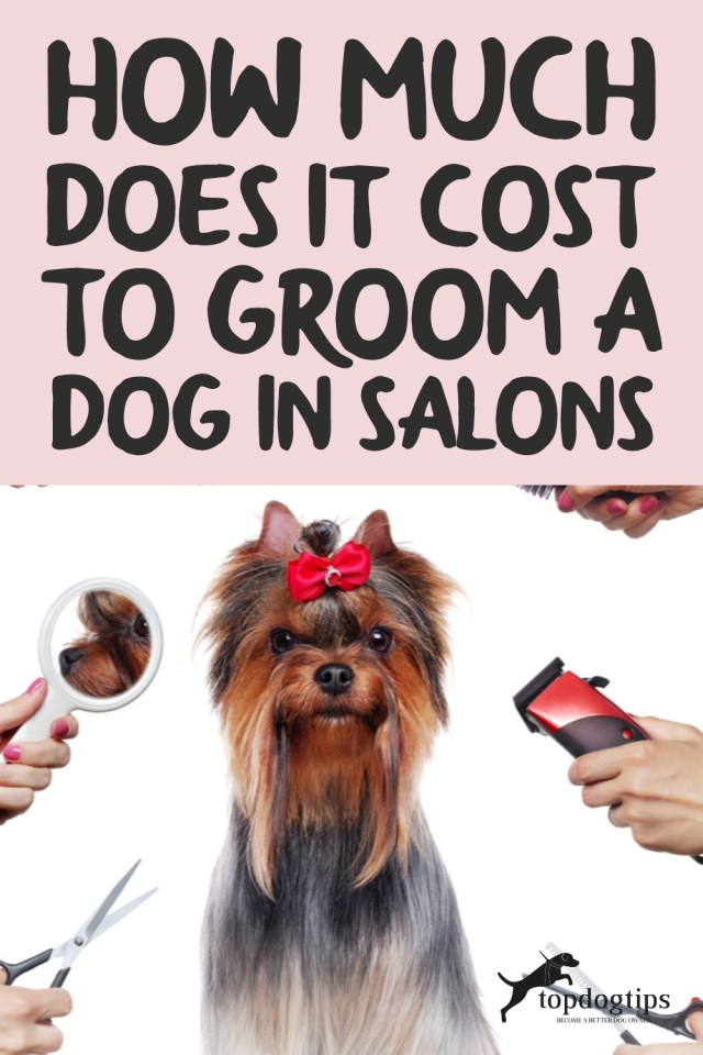 How Much Does It Cost to Groom a Dog in Salons