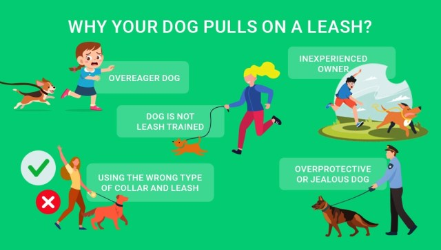 Leashes for dogs that pull