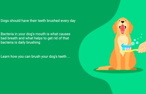 Brush Your Dogs Teeth