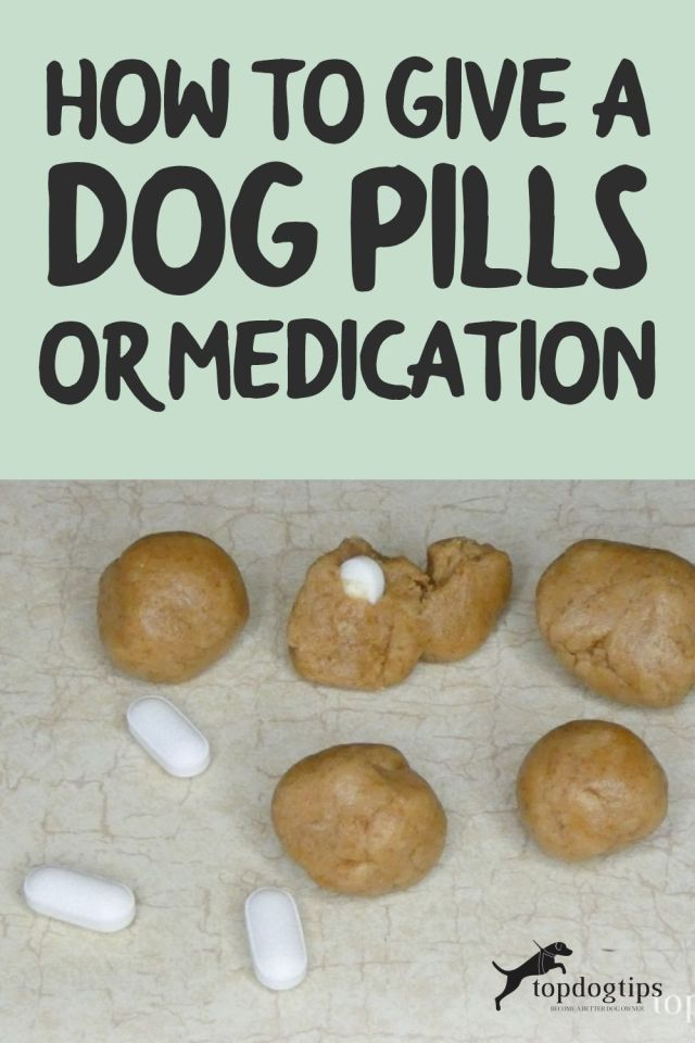 Give A Dog Pills