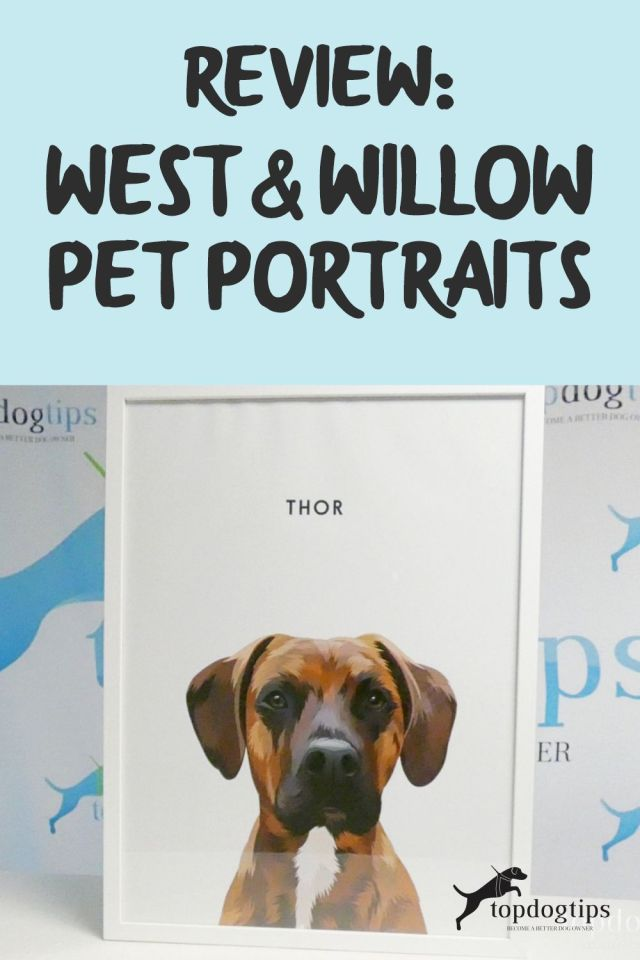 West - Willow Pet Portraits
