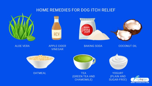 Top 5 Best Itch Relief for Dogs Remedies