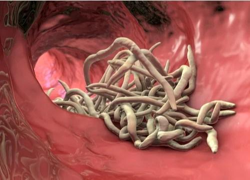 natural deworming