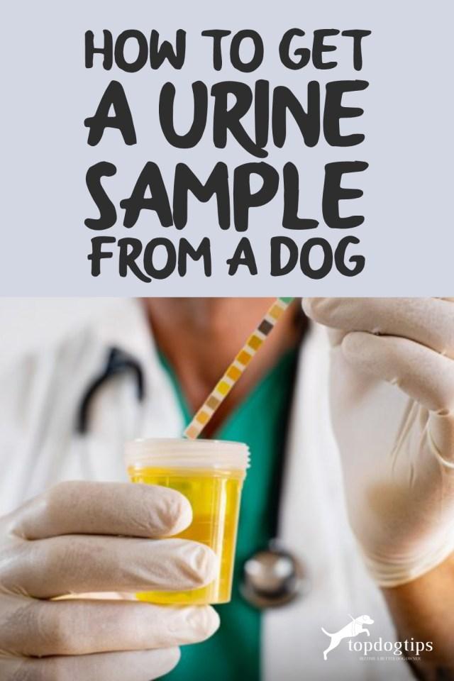 Dog Urine Sample