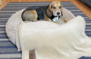 Pet Craft Supply Calming Dog Bed