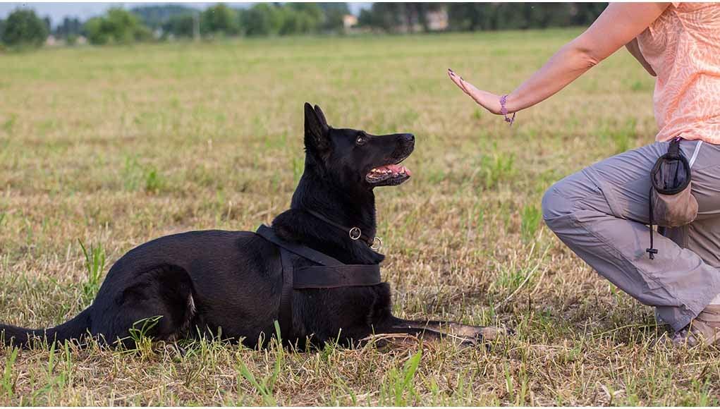 reward-based training