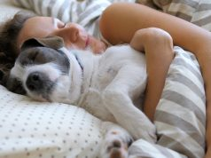 How Many Dog Owners Have Their Dog Sleeping in Bed With Them?