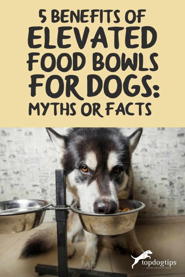5 Benefits of Elevated Food Bowls for Dogs- Myths or Facts-