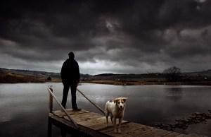 hurricane and pets