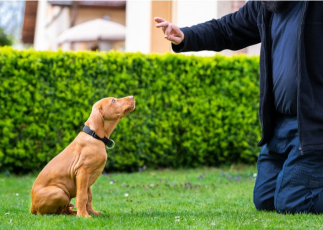 Training and raising a puppy