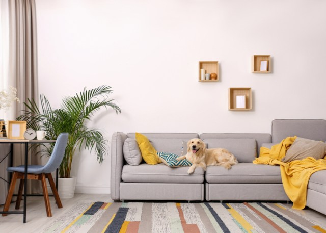 Home preparation tips for a new puppy