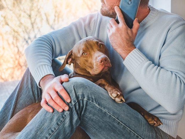 owner calling veterinarian