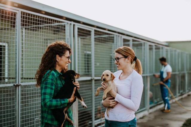 pet friendly shelter