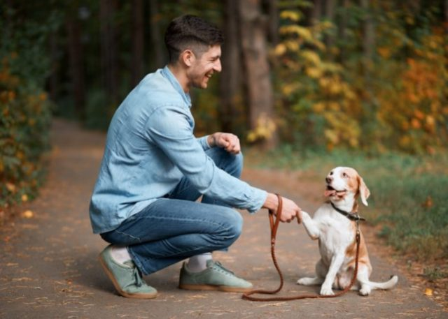 Only Let Your Dog Greet A Stranger If They Ask