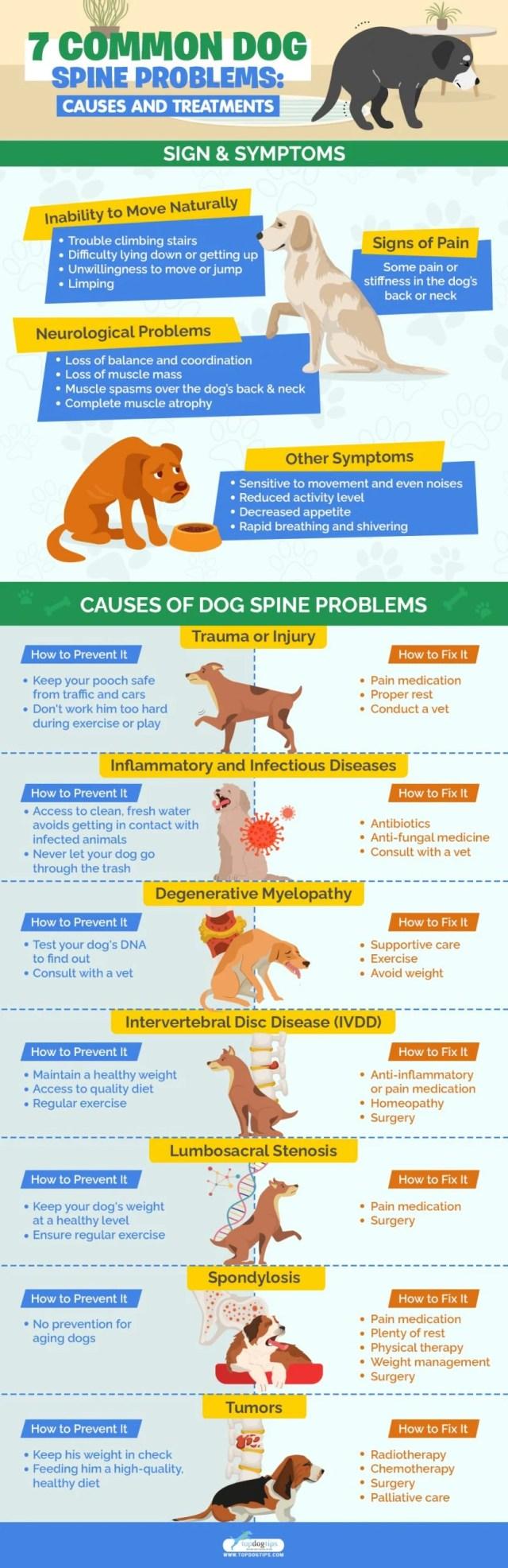 Dog Spine Problems