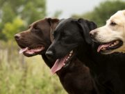 The 10 Most Popular Dog Breeds of 2021: An Overview