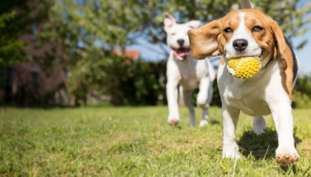Etiquette In Public Places That Every Dog Owner Must Know