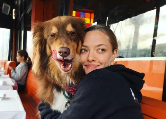 Amanda Seyfried and Her Shepherd-Collie Mix, Finn