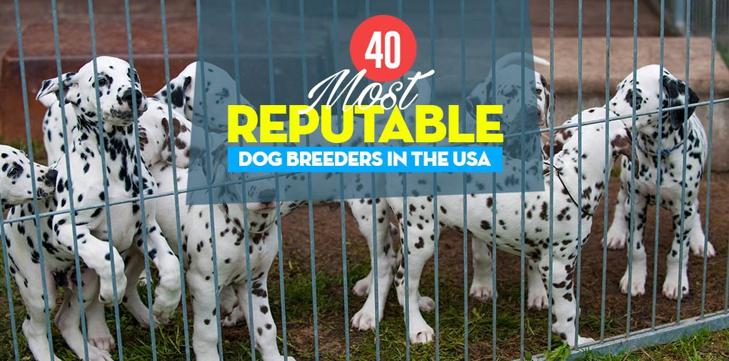 Top 40 Reputable Dog Breeders of 2021: An Overview