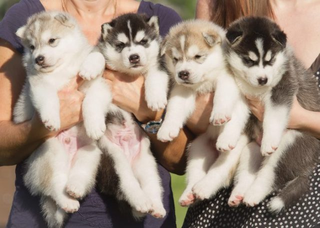 What Are Reputable Dog Breeders?