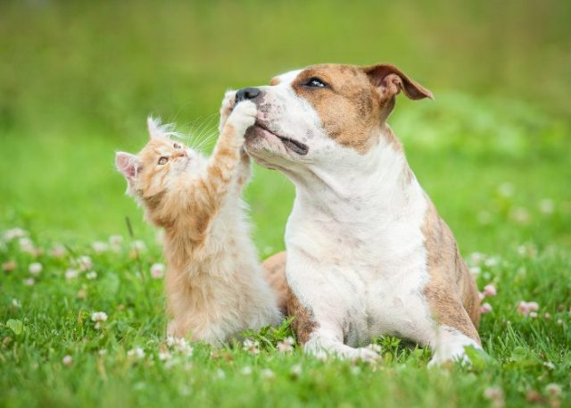 Tip #5: Teach Your Pets Basic Commands