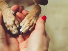 What Happens to Pets When Their Owners Face Death: An Overview