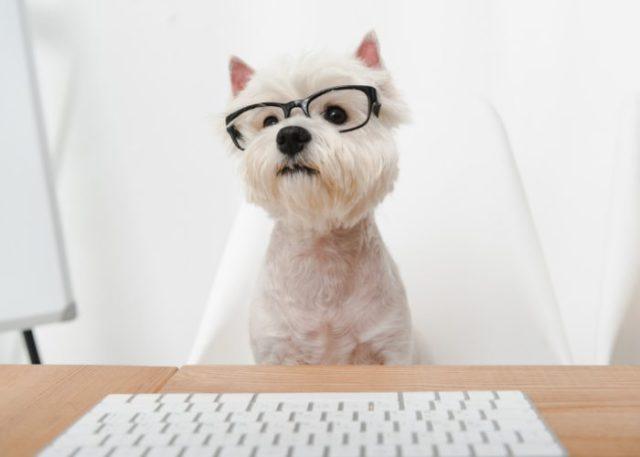 Obtain Pet Trust or Agreement
