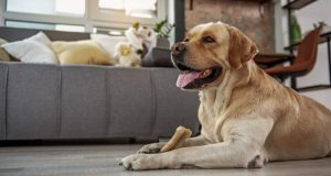 Best Bone Chews Recommended for Any Dogs To Snack On