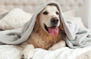 Tips on Getting Pet Pee Out of Mattress: What To Do To Remove Them?