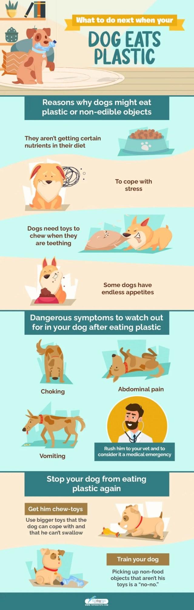 Dog Ate Plastic