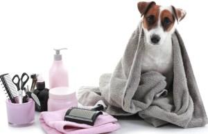 homemade dog grooming kit