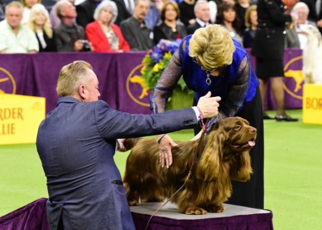 How Dog Show Works