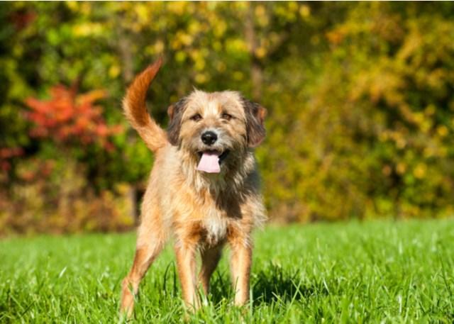Mixed dog breed's unique traits