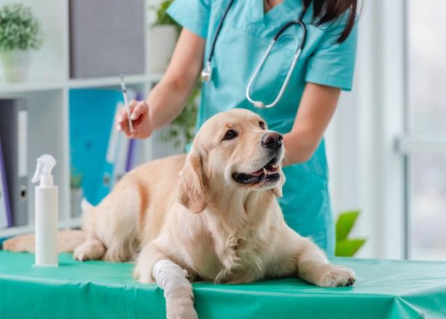Purebred's hefty vet price tag