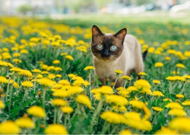 Beautiful Feline in a Meadow