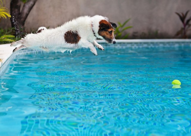 hyperactive dog jumping into the water