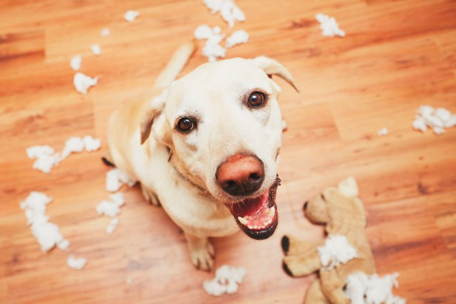 If Your Dog Destroys Someone's Else's Property, Own Up To It