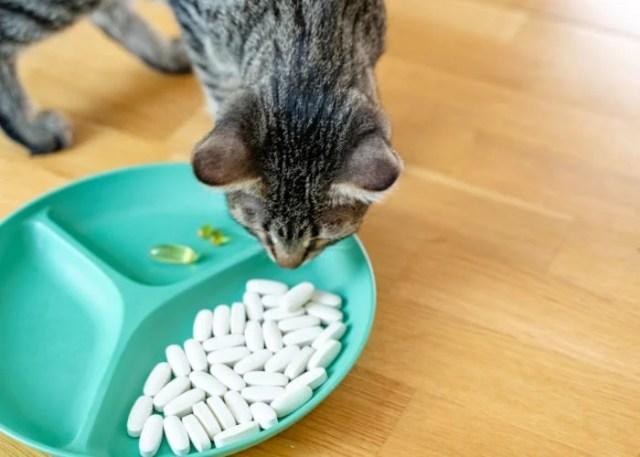 Cat Disease #8: Hyperthyroidism