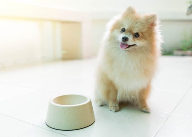 Potential Inconveniences of Fresh Dog Food Delivery Services