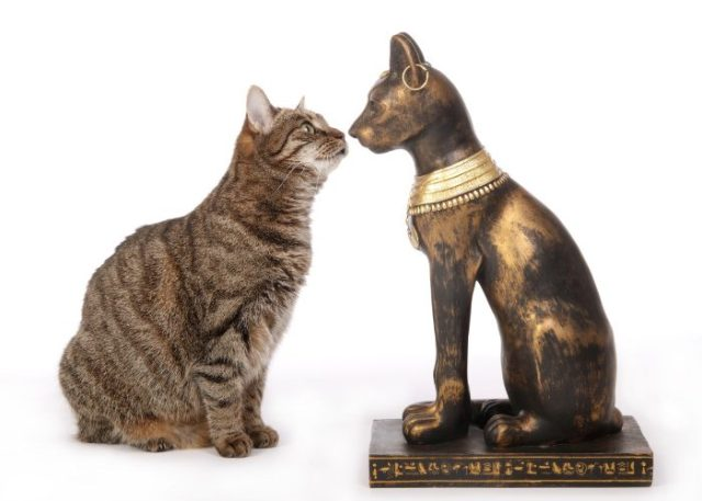 Evolution of Cats: Early Civilization's Pet