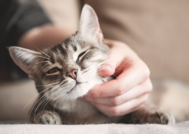 Evolution of Cats: Catering To The House Cats