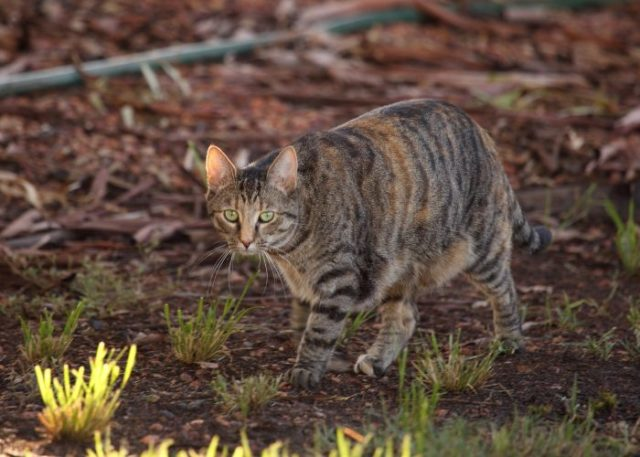 Can Feral Cats Become House Cats?