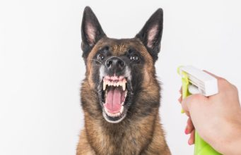 Natural Dog Repellent Ingredients and Mixes You Wouldn't Want to Miss
