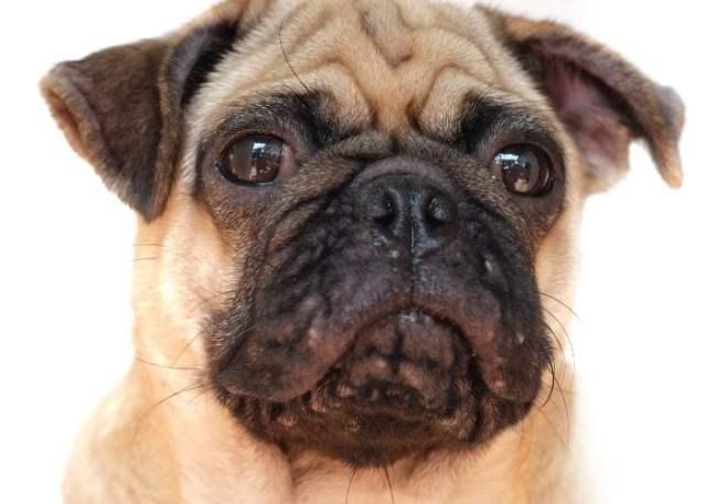 5. Canine Acne