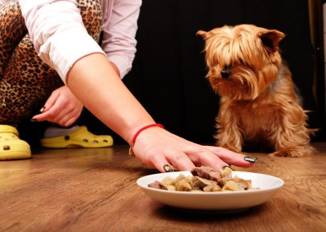 20 Reasons Why Your Dog Won't Eat or Drink: 1. Simply Not Hungry and Not Thirsty